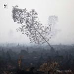 4-dampak-yang-sangat-merugikan-dari-kebakaran-hutan